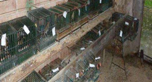 Bracconiere denunciato per maltrattamento animali