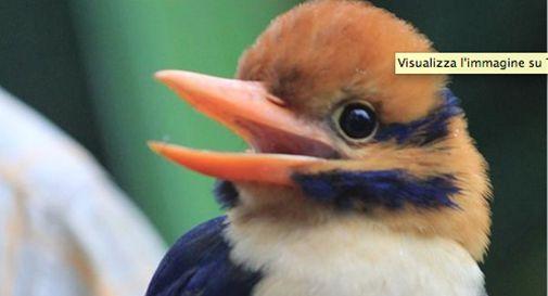 Scienziato: fotografa per la prima volta uccello raro e poi lo uccide