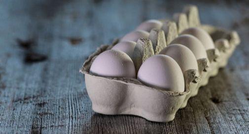 Muore dopo aver mangiato 42 uova, aveva scommesso che sarebbe riuscito ad arrivare a 50