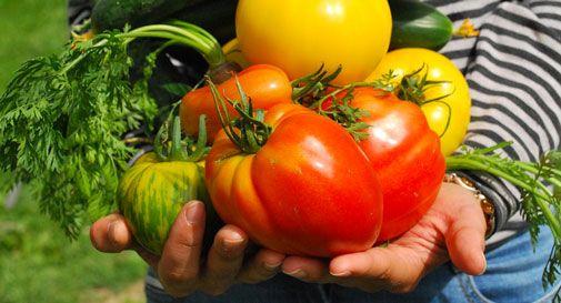 Al brolo di San Giacomo solo coltivazioni bio e sostenibili: niente monocolture