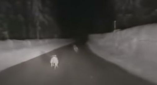 un fermo-immagine del video