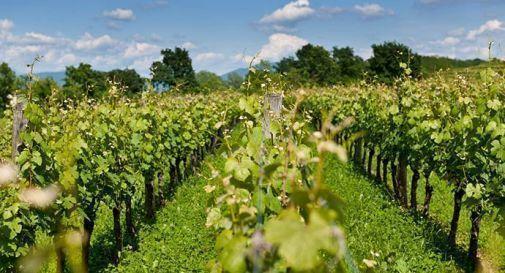 Veneto quarta potenza al mondo nella produzione vitivinicola