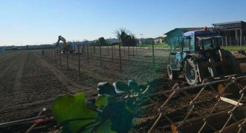 Pugno duro del comune: le viti e i pali del vigneto vicino all'asilo vanno tolti (in parte)