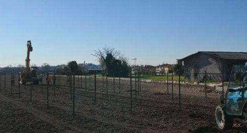Vigneto vicino all'asilo, la proprietà fa ricorso al Tar