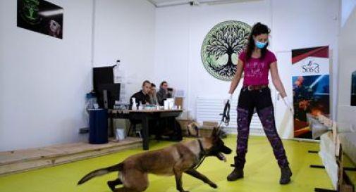 Cani annusa-Covid, al via sperimentazione in Gb