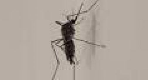 Natale, occhio a festeggiare troppo: la Zanzara Coreana è in agguato