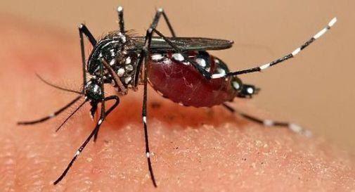 Lotta alla zanzara tigre: multe fino a 500 euro per chi non rispetta l'ordinanza