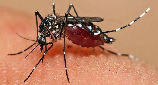 Ponte di Piave dichiara guerra alla zanzara tigre