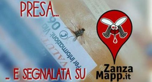 Zanzara tigre, ecco l'app che l'acchiappa