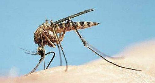 Il comune di Casier distribuisce gratuitamente Blister ecologici per contrastare le zanzare