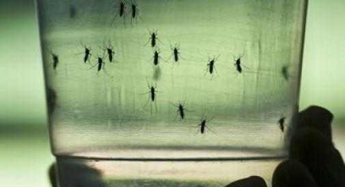 Virus Zika, Florida dichiara stato emergenza sanitaria in 4 contee