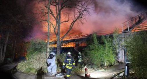 Incendio allo zoo, strage di animali
