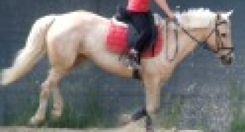 Campus estivo in maneggio equitazione e inglese oggi for Rondine in inglese