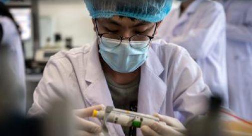 Influenza: virus 'potenzialmente pandemico' scoperto in Cina nei maiali.